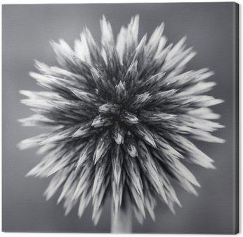 Leinwandbild Lila Kugel-Distel-B