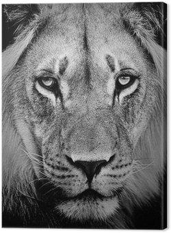 Leinwandbild Lion portrait