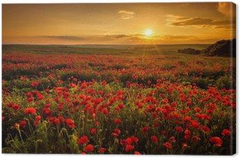 Leinwandbild Mohnfeld bei Sonnenuntergang