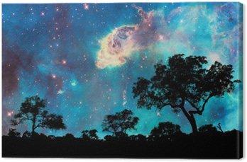 Leinwandbild Nachtlandschaft mit Silhouette von Bäumen und starry night