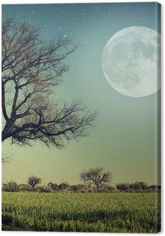 Leinwandbild Natur-68
