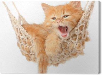 Leinwandbild Nette rothaarige Kätzchen in der Hängematte