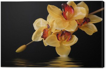 Leinwandbild Orange Orchideen