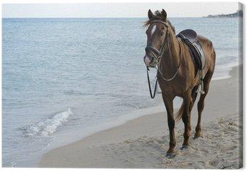 Leinwandbild Pferd am Strand