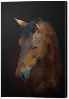 Leinwandbild Pferd auf schwarz