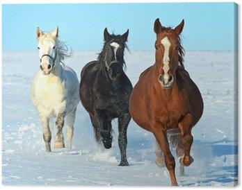 Leinwandbild Pferd