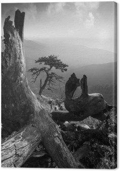 Leinwandbild Pinetree auf einem monuntain Hügel. Schwarz und weiß