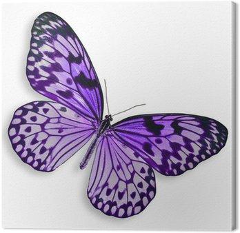 Leinwandbild Purple Butterfly fliegen