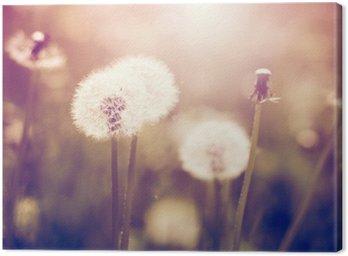 Leinwandbild Pusteblumen auf einer Wiese, Vintage-Stil