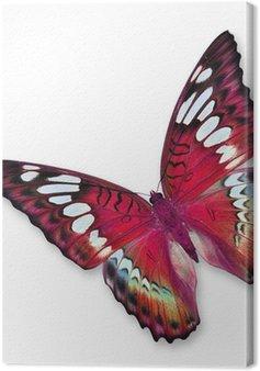Leinwandbild Red Butterfly