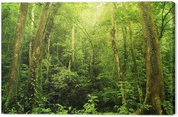 Leinwandbild Regen Wald