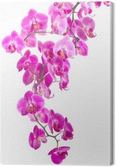 Leinwandbild Rosa Blüten Orchidee
