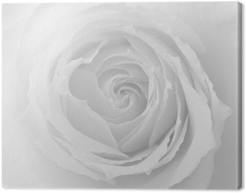 Leinwandbild Rose, Rose