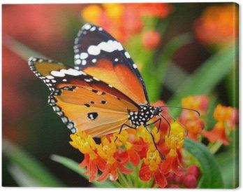 Leinwandbild Schmetterling auf orange Blume im Garten