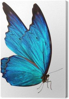 Leinwandbild Schmetterling Makro-Hintergrund