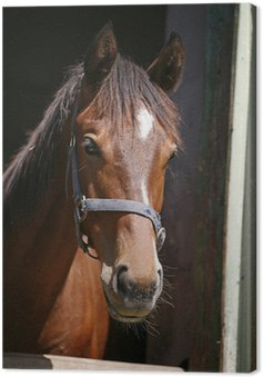 Leinwandbild Schöne reinrassige Pferde in seinem Stall beobachten