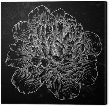 Leinwandbild Schöne schwarze und weiße Pfingstrose Blume isoliert auf den Hintergrund. Von Hand gezeichnete Kontur Linien und Strichen.