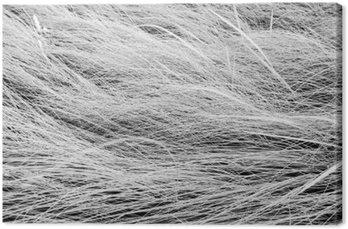 Leinwandbild Schwarz-Weiß-Foto, schließen langes Gras Feld Textur TERGRU up