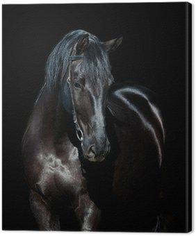Leinwandbild Schwarzes Pferd auf schwarzem Hintergrund isoliert