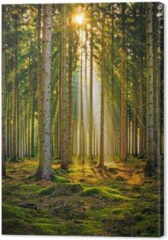 Leinwandbild Sonnenstrahlen im Nadelwald im Morgennebel