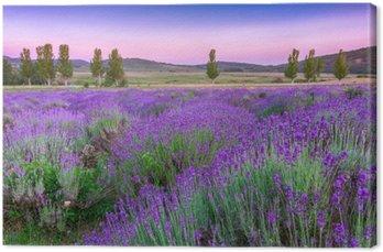 Leinwandbild Sonnenuntergang über einem Lavendelfeld im Sommer