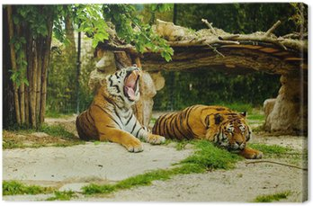 Leinwandbild Tigre