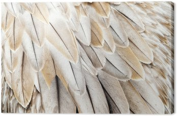Leinwandbild Vogelfedern
