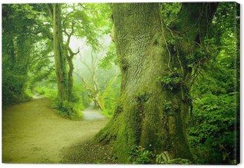 Leinwandbild Wald Pathway