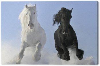 Leinwandbild Weißen und schwarzen Pferd
