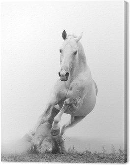 Leinwandbild Weißes Pferd