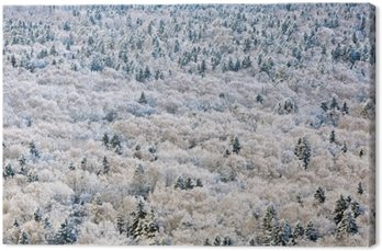 Leinwandbild Winterwald, Region Tver, Russland.