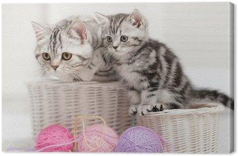 Leinwandbild Zwei Katzen in einem Korb mit Wollknäuel