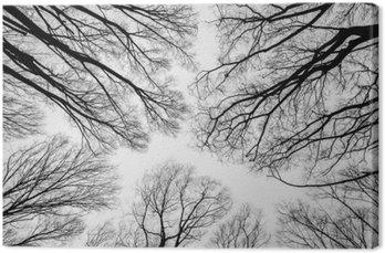 Leinwandbild Zweig der toten Baum