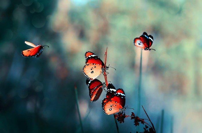 Obraz na Płótnie Motyl - Zwierzęta