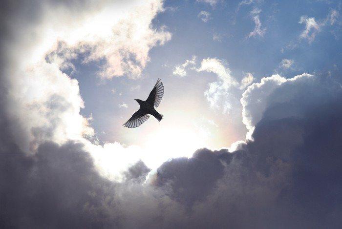 Mural de Parede em Vinil Angel Bird in Heaven - iStaging