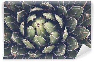 Mural de Parede em Vinil Close up de agave plantas suculentas, foco seletivo, tonificação