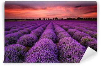 Mural de Parede Lavável Stunning landscape with lavender field at sunset