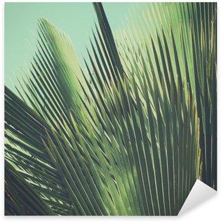 Naklejka Pixerstick Abstrakcyjna tropikalnych tła archiwalne. Liści palmowych w słońcu.