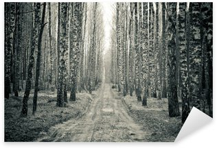 Naklejka Brzozowy las w czerni i bieli