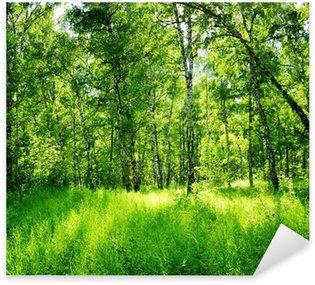 Naklejka Pixerstick Brzozowy las w słoneczny dzień. Zielony las w lecie