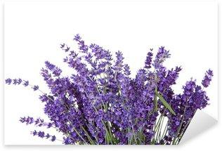Naklejka Bukiet zbierane lavende