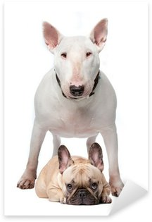 Naklejka Bull terrier oraz buldog francuski