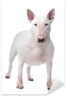 Naklejka Bull terrier