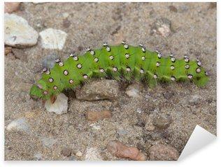 """Naklejka Caterpillar """"Mały Cesarz Moth"""" side (cesarz moth)"""