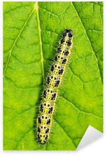 Naklejka Caterpillar spania na zielony liść ....