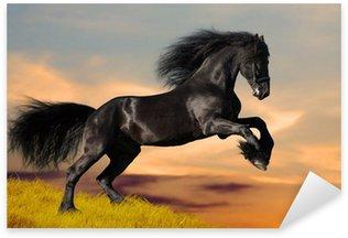Naklejka Czarne konie fryzyjskie galopuje w zachodzie słońca