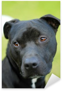 Naklejka Czarny Pies Rasowy Pitbull