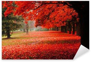 Naklejka Czerwony jesienią w parku