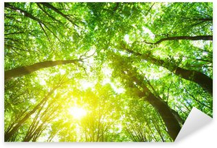 Naklejka Drzew leśnych