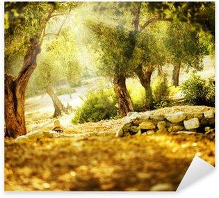 Naklejka Pixerstick Drzewa oliwne